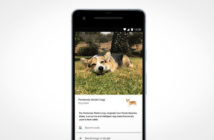 Google lens can identify pet breeds